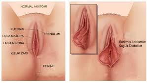 Porno star  Porno Sex Video  Hd Porno İzle  Mobil Sikiş