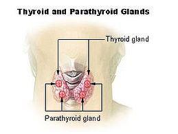 Sekonder Hiperparatiroidizm